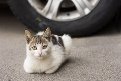 Little homeless kitten. Near next to the car on asphalt Royalty Free Stock Photos