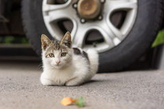 Little homeless kitten. Near next to the car on asphalt Stock Image