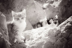 Little homeless kittens in the rocks by the sea. Stock Photography