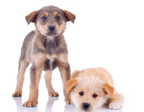 Little homeless puppy Royalty Free Stock Photography