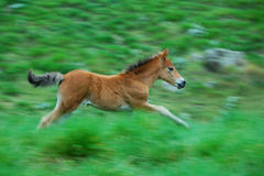 Little horse Royalty Free Stock Images