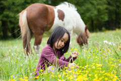 Little horse and asian girl Stock Photo