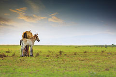 Little horse and mom freedom in green meadow Royalty Free Stock Photos
