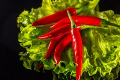 A little hot red pepper on a black background rests on a green leaf salad.  Stock Photo