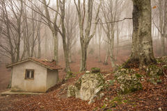 Little house in the forest Royalty Free Stock Image