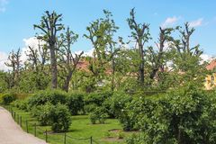 Little house in the garden with trimmed apple trees near Vienna Austria royalty free stock photo