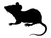 Little house mouse Royalty Free Stock Photography