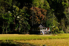 Little house in paddy field Stock Photos
