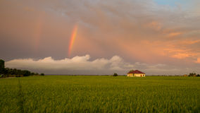 Little house in paddy fields Stock Image
