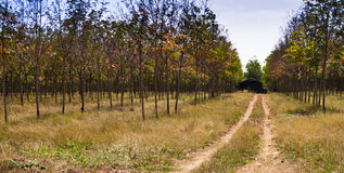 Little House in the rubber plantations. At eastern Thailand Stock Photos