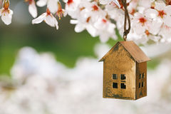 Little house in Spring with blossom cherry Royalty Free Stock Images