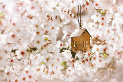 Little house in Spring with blossom cherry flower sakura Royalty Free Stock Photography