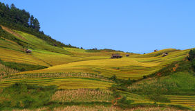 Little house on the terraces. Mu Cang Chai - Yen Bai - Viet Nam Stock Images