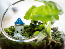 Little house in Terrarium Plant. Royalty Free Stock Images