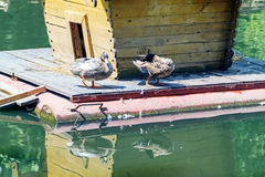 Little House on the water for ducks. Little House on the water and ducks on a sunny day Royalty Free Stock Photography
