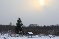 Little house in the winter forest under tree Stock Photo