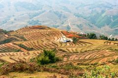 Little houses between rice culture  in Sapa mountains Royalty Free Stock Image