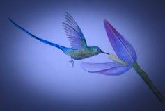 Little hummingbird Royalty Free Stock Photo