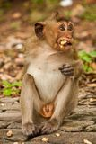 Little hungry monkey Royalty Free Stock Photo