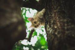 Little Hunter Stock Photo