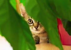 Little hunter cat near houseplants stock image