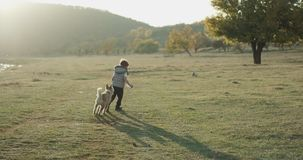 Little husky dog playing very lovely with three years old boy in the middle of nature beside a lake stock footage