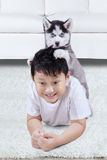 Little husky puppy playing with a boy Royalty Free Stock Photos