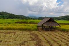 A little hut in green field stock image