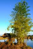 Little hut beside marsh Royalty Free Stock Images