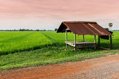 Little hut in the rice field Stock Photography