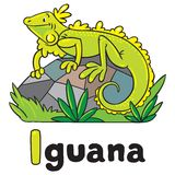 Little iguana for ABC. Alphabet I. Children vector illustration of little funny iguana on rock. Alphabet I Royalty Free Stock Image