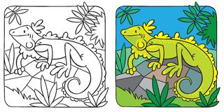 Little iguana coloring book Stock Photos