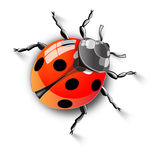 Little insect Stock Image