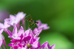 Little insect on purple flower Stock Photography