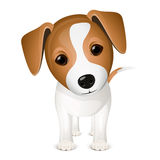 Little jack russel Stock Photography