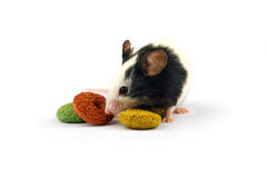Mouse and rodent food isolate on white. Little japanese mouse and colorful rodent food isolate on white Royalty Free Stock Photos