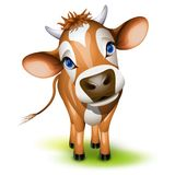 Little jersey cow. With a cocked head and blue eyes stock illustration