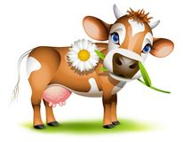 Little Jersey cow. Eating daisy vector illustration