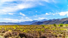 The Little Karoo region of the Western Cape Province of South Africa with the Grootswartberg Mountains on the horizon. The Little Karoo region of the Western Royalty Free Stock Images