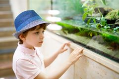 Little kid boy admire different reptiles and fishes in aquarium. Through the glass in zoo. Happy school child watching and observing animals and reptiles Royalty Free Stock Photo