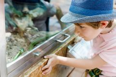 Little kid boy admire Poisonous green snake in terrarium. Through the glass in zoo. Happy school child watching and observing animals and reptiles. Family royalty free stock photo