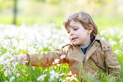 Little kid boy in blooming and flowering apple garden orchard on spring day. Happy child smiling on warm sunny day. Family, holiday, spring concept royalty free stock photos