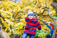 Little kid boy in colorful clothes enjoying climbing on tree on autumn day Royalty Free Stock Photography