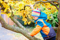 Little kid boy in colorful clothes enjoying climbing on tree on autumn day Stock Photo
