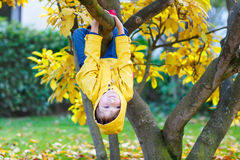 Little kid boy in colorful clothes enjoying climbing on tree on autumn day Royalty Free Stock Image