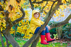Little kid boy in colorful clothes enjoying climbing on tree on. Cute little kid boy enjoying climbing on tree on autumn day. Preschool child in colorful royalty free stock photography