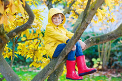 Little kid boy in colorful clothes enjoying climbing on tree on royalty free stock images