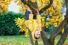 Little kid boy in colorful clothes enjoying climbing on tree on stock photos