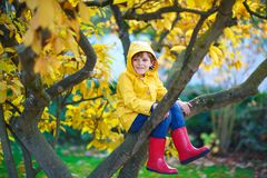 Little kid boy in colorful clothes enjoying climbing on tree on stock photo