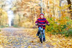 Little kid boy in colorful warm clothes in autumn forest park driving a bicycle Royalty Free Stock Photography
